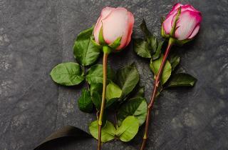 Un par de rosas rosas unidas con un listón y un medallón de lacre color negro